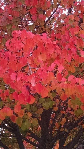 "When we told our Praying Friends about our ""walk,"" many of them shared pictures of red leaves with us. This one is from our RT."